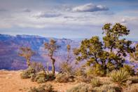 """<p><strong>Best camping in Arizona:</strong> Desert View Campground, Grand Canyon National Park</p> <p>Escape the tourist throngs of Grand Canyon Village and enjoy a quieter, simpler camping experience at Desert View. Located a stone's throw from the craggy maw of the <a href=""""https://www.cntraveler.com/gallery/best-grand-canyon-hikes?mbid=synd_yahoo_rss"""" rel=""""nofollow noopener"""" target=""""_blank"""" data-ylk=""""slk:Grand Canyon"""" class=""""link rapid-noclick-resp"""">Grand Canyon</a>, these first-come, first-served sites are a shady, private place to unwind, in the midst of a juniper grove.</p>"""