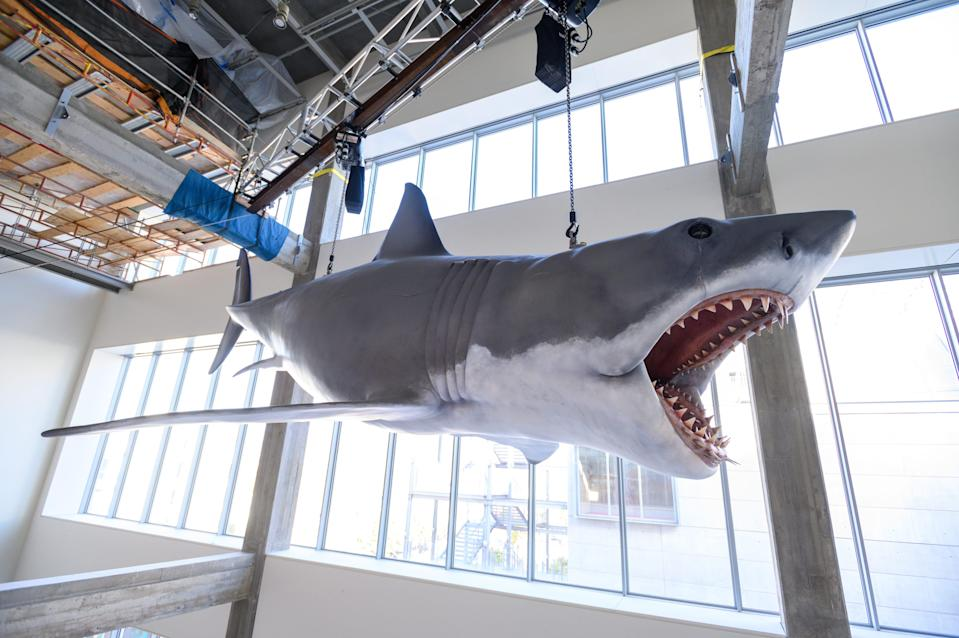 """Bruce the Shark from """"Jaws"""" will greet guests at the Academy Museum."""