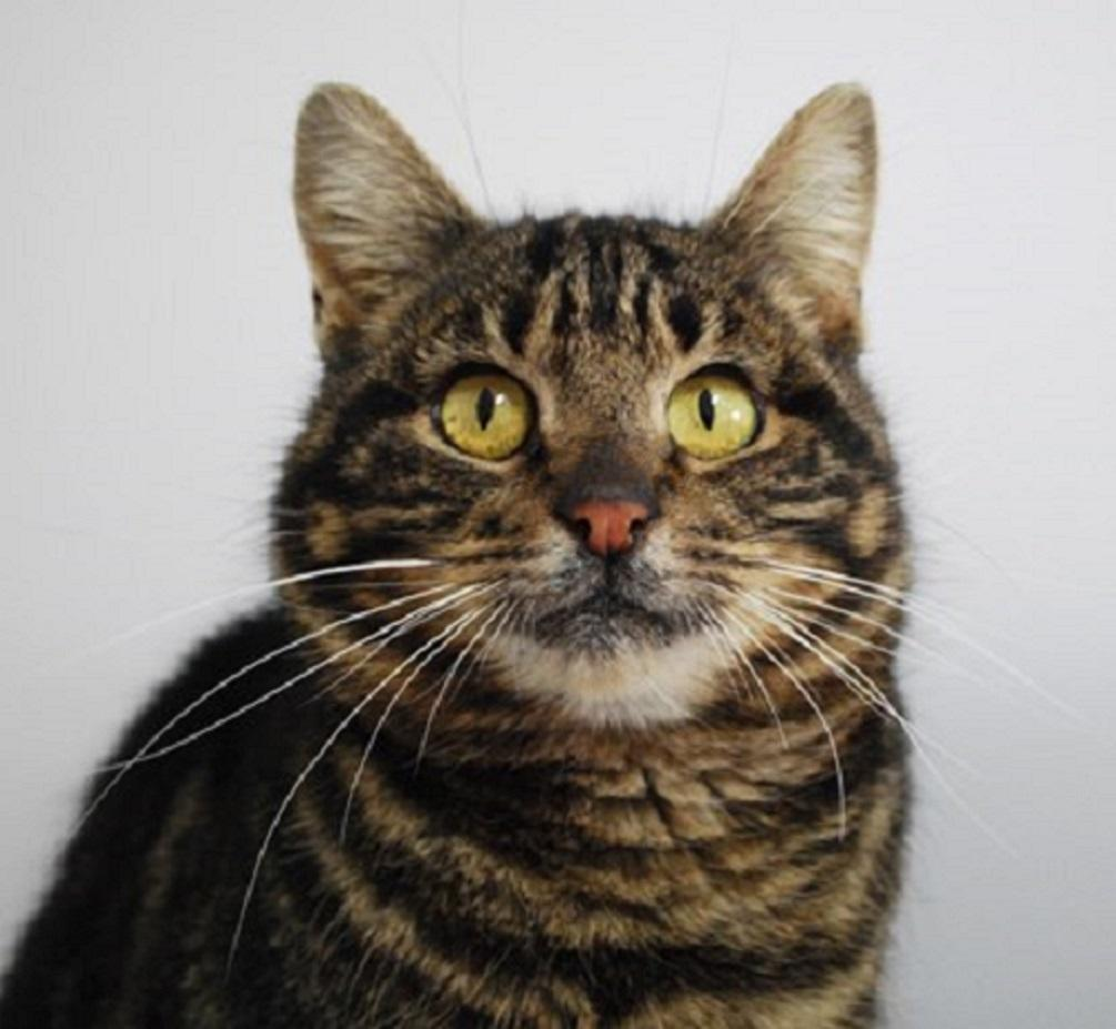 The money raised will help cats like Maddie, who was found on a farm (Cats Protection)