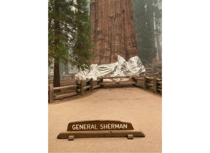 CORRECTS DATE TO THURSDAY, SEPT. 16 - This photo provided by the Southern Area Blue Incident Management Team on Thursday, Sept. 16, 2021, shows the giant sequoia known as the General Sherman Tree with its base wrapped in a fire-resistant blanket to protect it from the intense heat of approaching wildfires at Sequoia National Forest in California. (Southern Area Blue Incident Management Team via AP)