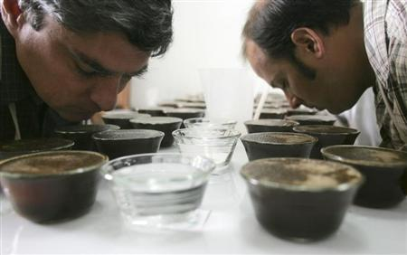 Coffee tasters smell coffee during a contest in Lima