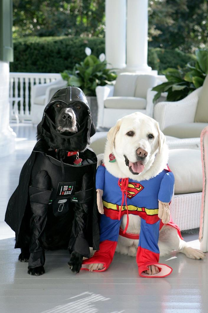 Dick Cheney's Labrador retrievers, Jackson and Dave, prepare for Halloween at the residence on Oct. 30, 2007.