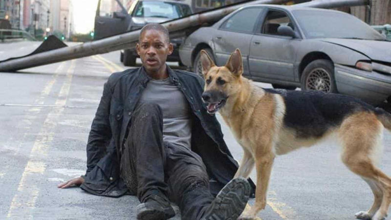 Will Smith and his canine companion in 'I Am Legend'. (Credit: Warner Bros)