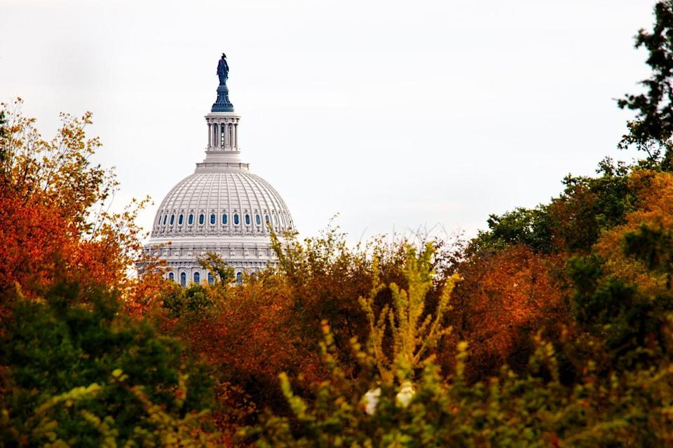 """<p><strong>Where to go:</strong> Our nation's capital is famous for its cherry blossoms in the spring, but try taking a walk down the National Mall or along the Potomac this autumn for a different kind of fun. </p><p><strong>When to go: </strong>Late October</p><p><a class=""""link rapid-noclick-resp"""" href=""""https://go.redirectingat.com?id=74968X1596630&url=https%3A%2F%2Fwww.tripadvisor.com%2FHotels-g28970-Washington_DC_District_of_Columbia-Hotels.html&sref=https%3A%2F%2Fwww.redbookmag.com%2Flife%2Fg34045856%2Ffall-colors%2F"""" rel=""""nofollow noopener"""" target=""""_blank"""" data-ylk=""""slk:FIND A HOTEL"""">FIND A HOTEL</a></p>"""