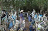 A mangrove forest in Vietnam's Thanh Hoa is festooned with plastic rubbish washed in with the tide