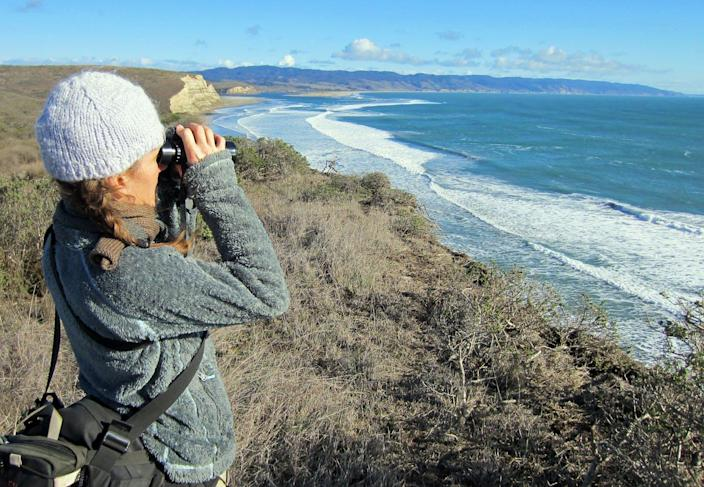 """<span class=""""caption"""">A volunteer looks for waterbirds at Point Reyes National Seashore in California during the National Audubon Society's annual Christmas Bird Count.</span> <span class=""""attribution""""><a class=""""link rapid-noclick-resp"""" href=""""https://flic.kr/p/Cfe8RK"""" rel=""""nofollow noopener"""" target=""""_blank"""" data-ylk=""""slk:Kerry W/Flickr"""">Kerry W/Flickr</a>, <a class=""""link rapid-noclick-resp"""" href=""""http://creativecommons.org/licenses/by/4.0/"""" rel=""""nofollow noopener"""" target=""""_blank"""" data-ylk=""""slk:CC BY"""">CC BY</a></span>"""