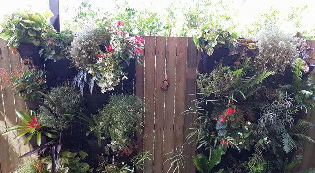 A photo of a python hiding in a vertical garden has baffled internet users. Photo: THE SNAKE CATCHER 24/7 - SUNSHINE COAST