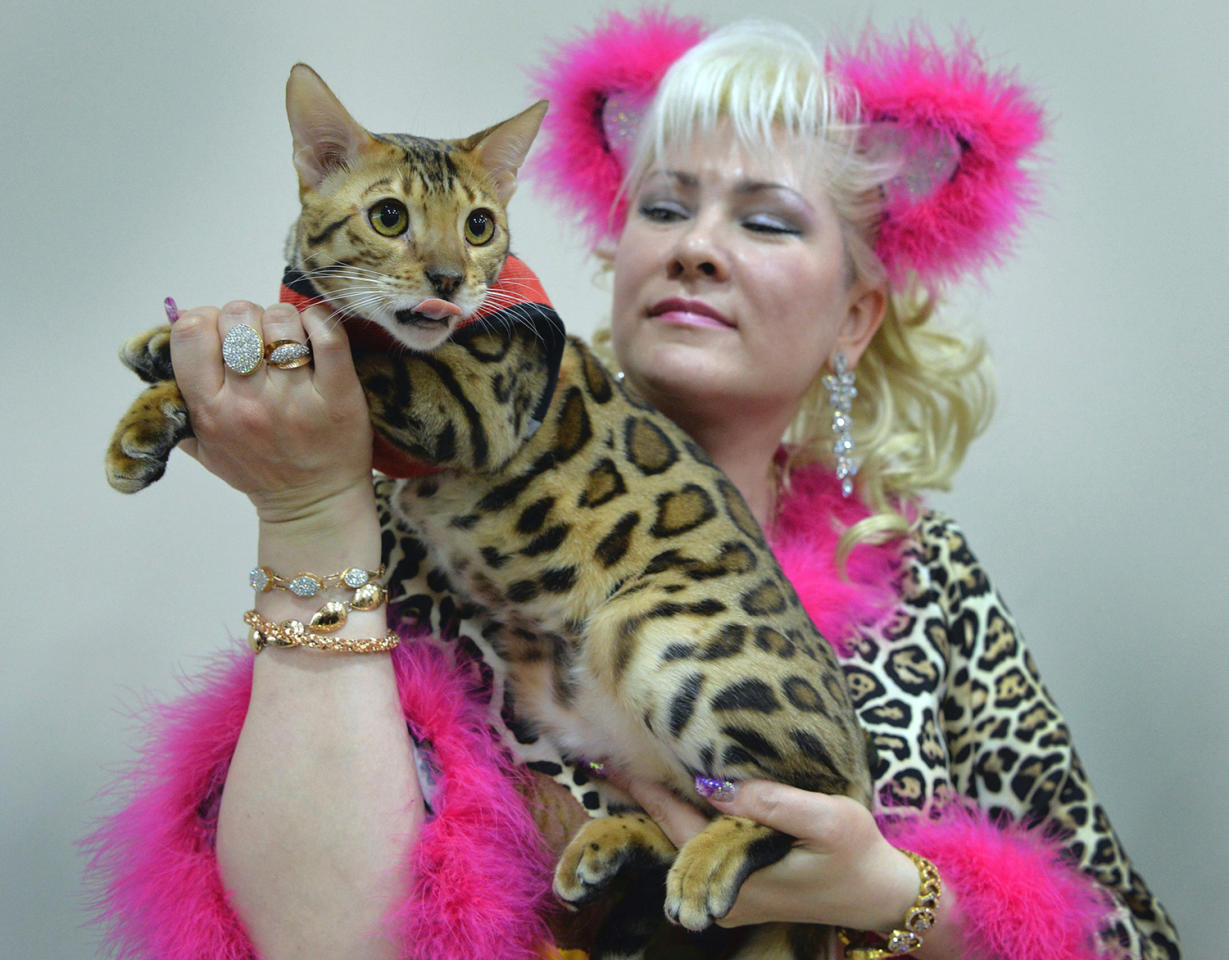 <p>An owner poses with her Bengal cat during the International cat exhibition in Bishkek on March 19, 2017. (Photo: Vyacheslav Oseledko/AFP/Getty Images) </p>