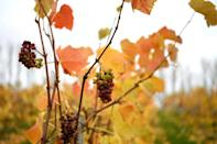 The Herefordshire red has aromas of cherry, blackberry and cranberry as well as exotic fruits