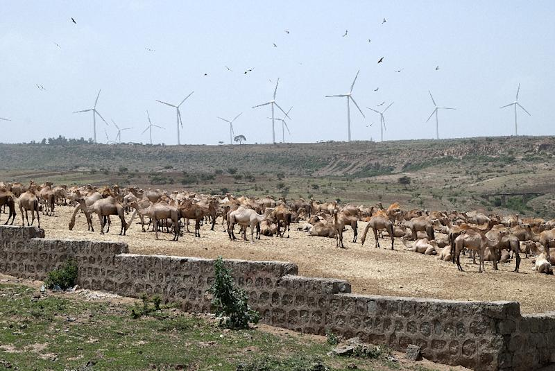 Camels stand near turbines of the Adama wind farm in Adama, south of the capital Adiss Ababa (AFP Photo/Vincent Defait)