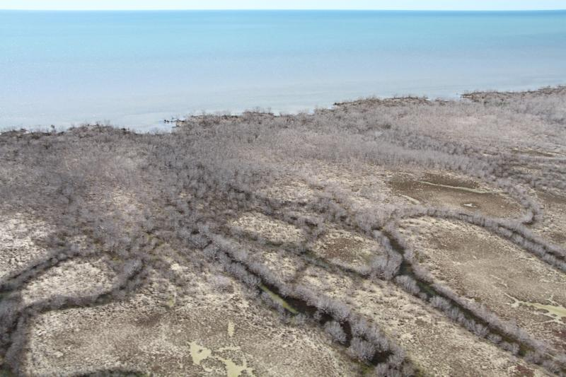 Some 7,000 hectares, or 9% of the mangroves in the Gulf of Carpentaria, perished in just one month (AFP Photo/)