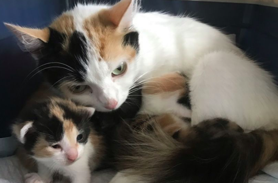 The mother and her kittens were found dumped in a box in a field (RSPCA)