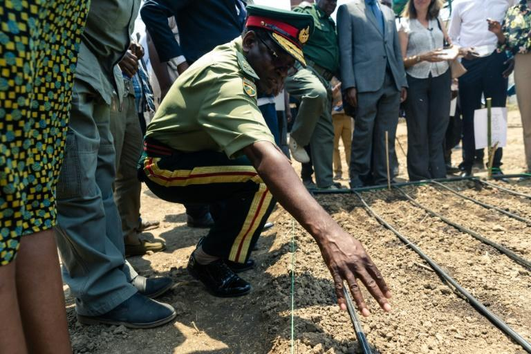 A senior army representative sowing some of the first industrial hemp crop in Zimbabwe at the Harare Central Prison in the capital, on October 11, 2019.The Zimbabwe Industrial Hemp Trust (ZIHT) is the first organization to be issued with a cannabis license in the southern African country. (AFP Photo/Jekesai NJIKIZANA)