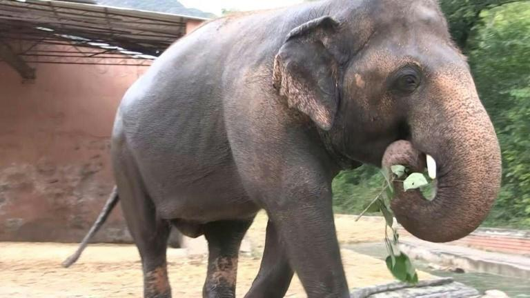 Music and farewells for Pakistan's celebrity elephant before relocation to a Cambodian sanctuary