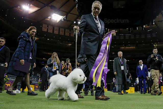 Flynn, a bichon frise and winner of Best In Show and handler Bill McFadden exit the ring after winning the 142nd Westminster Kennel Club Dog Show in New York, U.S., February 14, 2018. REUTERS/Brendan McDermid