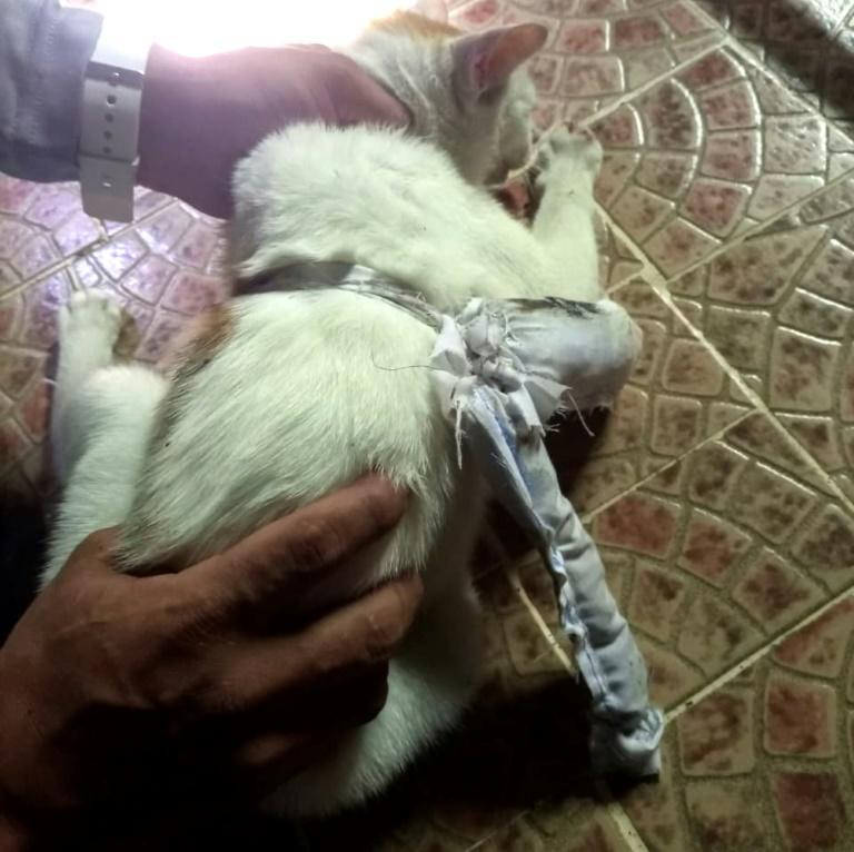 The white cat bearing an assortment of drugs in a pouch tied to its body