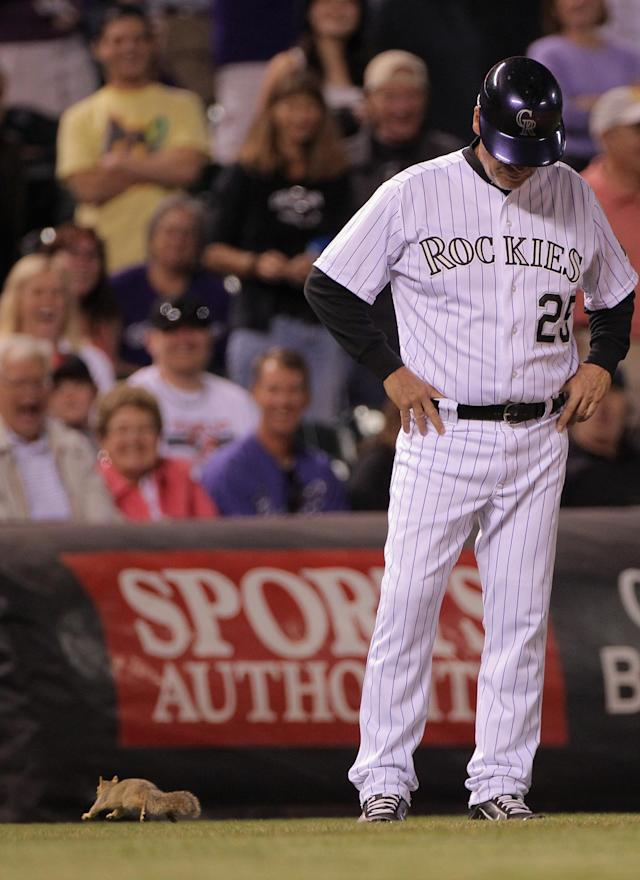 DENVER, CO - JUNE 01: Third basr coach Rich Dauer #25 of the Colorado Rockies watches as a squirrel runs on the field during the sixth inning against the Los Angeles Dodgers at Coors Field on June 1, 2012 in Denver, Colorado. (Photo by Doug Pensinger/Getty Images)