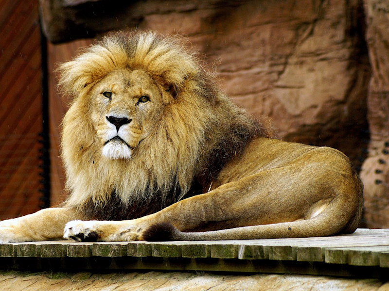 A sleep doctor says knowing whether you're a 'lion ... - photo#39