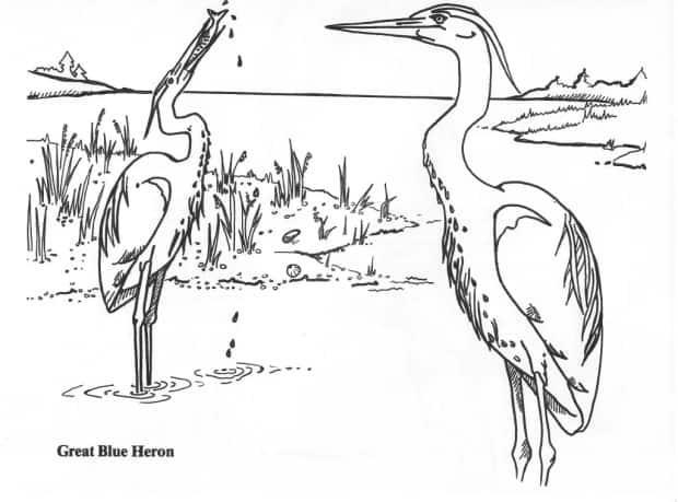 The book features drawings by Connie Gaudet. (Nature P.E.I. - image credit)