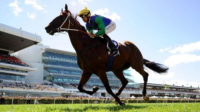 Harvey moves to snap-up Tinkler's racing operations