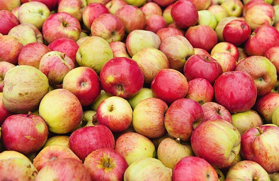 <p>Honeycrisp apples were developed in Minnesota in the 1960s and have been growing in popularity since first being sold commercially in the 1990s. They're incredibly crisp with a pleasing balance between sweet and tangy.</p>