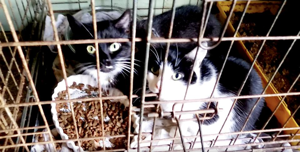 The couple were keeping nine cats in small cages, with little or no food or water. (SWNS)