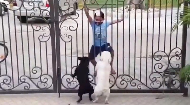 Hilarious Video of Litte Boy Teaching Dance Moves to Two Excited Puppies Go Viral And Netizens Can't Stop Laughing!