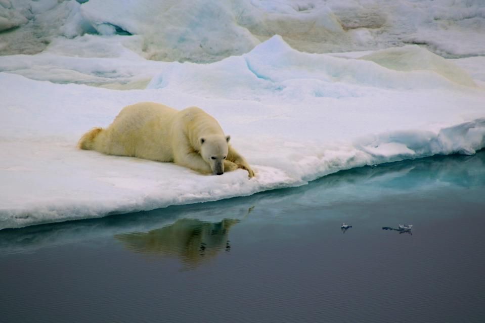 <p>This photograph was taken while crossing the Fram Strait near the eastern Greenland coast. The polar bear found a portion of fast ice which rapidly became his home. It was named as the winner in the Behaviour category. (PA) </p>