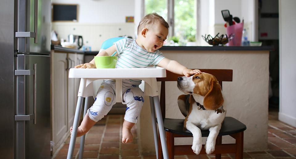 A baby pats a dog. Source: Getty Images