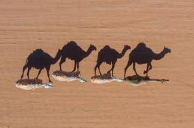 Struck by drought: Oz to cull 10,000 wild camels