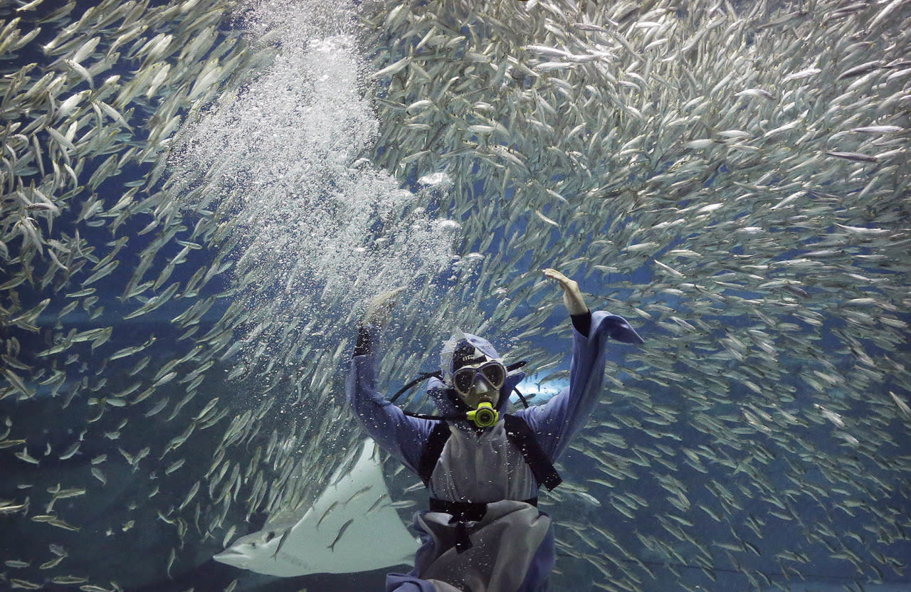 <p>A diver performs with sardines as part of summer events at the Coex Aquarium in Seoul, South Korea, July 29, 2016. The aquarium features 40,000 sea creatures from over 600 different species. (Photo: Ahn Young-joon/AP)</p>