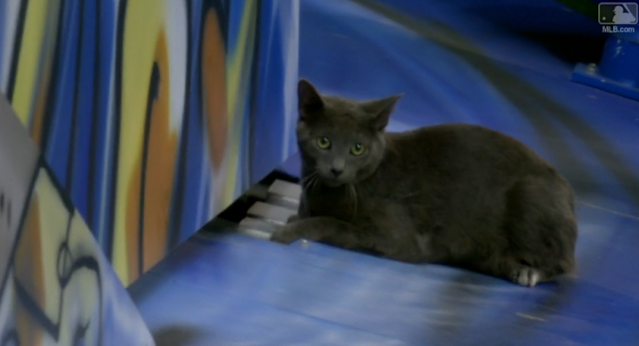 A cat invaded Marlins Park, and found a temporary home on the home run sculpture. (MLB.com)