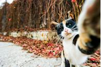 "<p>This cat just wants to take his own selfies. I don't blame him, he's going for an #aesthetic. </p><p><strong>RELATED: </strong><a href=""https://www.redbookmag.com/love-sex/relationships/news/a50094/ill-never-have-cute-couple-photos/"" rel=""nofollow noopener"" target=""_blank"" data-ylk=""slk:Why My Boyfriend of 5 Years and I Only Have 5 Photos of the Two of Us Together"" class=""link rapid-noclick-resp""><strong>Why My Boyfriend of 5 Years and I Only Have 5 Photos of the Two of Us Together</strong></a></p>"