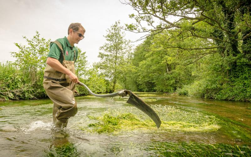 Cutting weeds in the River Dun to help salmon in Hampshire  - Credit: National Trust