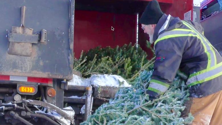 Fewer Christmas trees at curb — and that's fine by P.E.I. sanitation workers