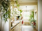 """<p class=""""body-dropcap"""">Picking out the <a href=""""https://www.cosmopolitan.com/lifestyle/g32668507/best-online-plant-shops/"""" rel=""""nofollow noopener"""" target=""""_blank"""" data-ylk=""""slk:perfect plant"""" class=""""link rapid-noclick-resp"""">perfect plant</a> for your <a href=""""https://www.cosmopolitan.com/food-cocktails/a32057948/best-kitchen-food-hacks/"""" rel=""""nofollow noopener"""" target=""""_blank"""" data-ylk=""""slk:kitchen"""" class=""""link rapid-noclick-resp"""">kitchen</a> can be a toughie! You can't just get <em>any </em>green bb—there are a lot of factors to consider. Like, how much sunlight does your cooking area get? Or what's the humidity sitch in that space? It's not as easy as finding one for your <a href=""""https://www.cosmopolitan.com/lifestyle/g36791311/best-plants-for-bedroom/"""" rel=""""nofollow noopener"""" target=""""_blank"""" data-ylk=""""slk:bedroom"""" class=""""link rapid-noclick-resp"""">bedroom</a> or <a href=""""https://www.cosmopolitan.com/lifestyle/g35918719/best-plants-for-bathroom/"""" rel=""""nofollow noopener"""" target=""""_blank"""" data-ylk=""""slk:bathroom"""" class=""""link rapid-noclick-resp"""">bathroom</a>. Maybe you even have to step back and ask yourself how <em>good</em> of a plant parent you are. It's okay, I'm with you!<br></p><p>Since you probably have more questions than answers right now (sorrrrryyy), I've already done the work for ya by gathering the best plants for the kitchen. <br><br>Below, you'll find herbs, flora, and grasses of all kinds that don't need much maintenance (you're welcome to you plant-loving plant killers out there). I've also included a few for you pros out there that may need a bit more attention and support if you're into it! Keep on scrolling to find the greatest indoor plants for your kitchen that'll for sure survive.<br></p>"""