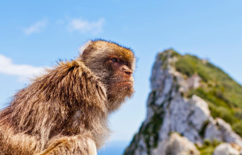 There are macaques atop the Rock - GETTY