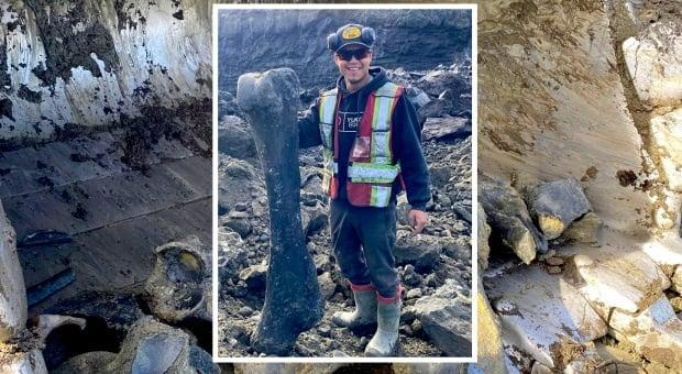 Miner Trey Charlie stands with a massive fossil he and his crew found near Dawson City, Yukon, a couple of weeks ago. The crew figures they dug up two almost-complete mammoth skeletons. (Submitted by Trey Charlie - image credit)