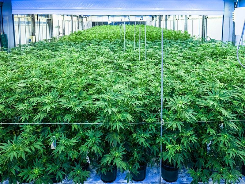 Pot Sector Focus Shifts From Legalization to Legitimacy