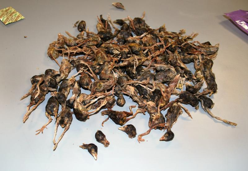The package of pet food from China consisted of tiny dead birds.