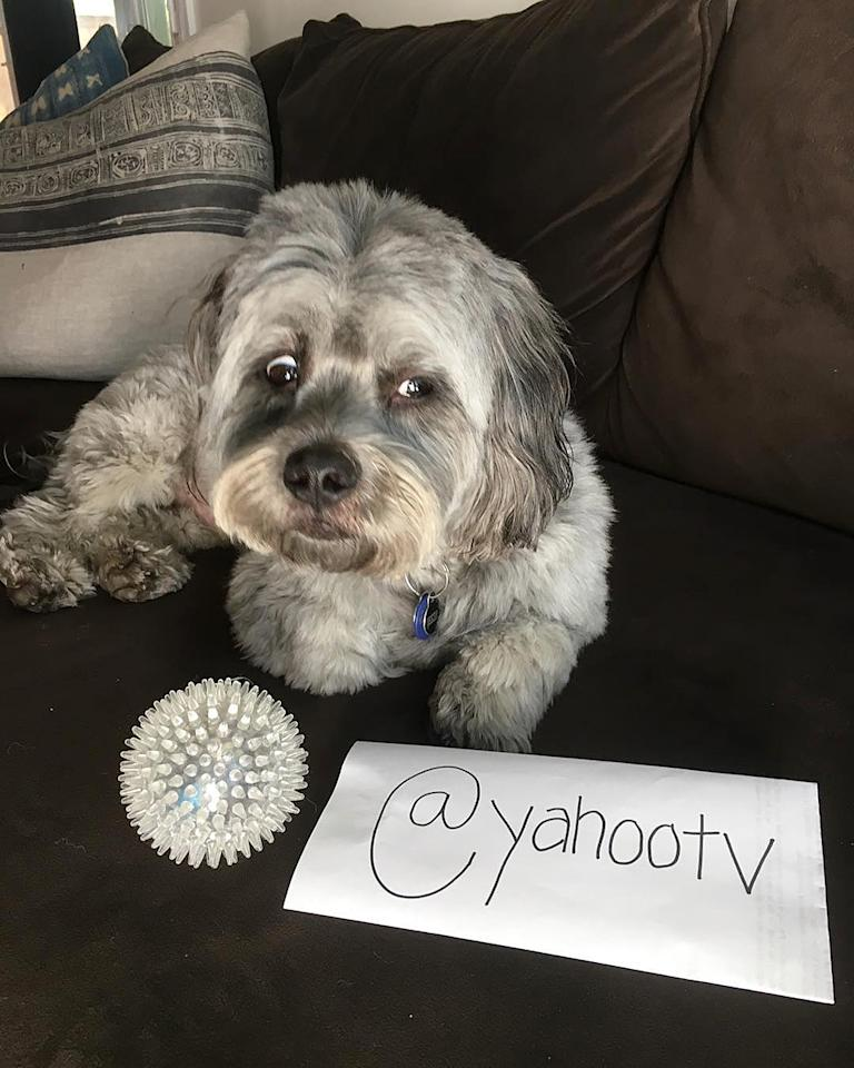 <p>This is Jesse mid eye roll that I made him pose for this photo op. We're watching the food network and waiting for glam to get here. @jbearthedog — @allymaki #Wrecked </p>
