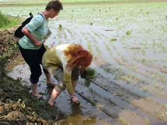 Tourists pictured on the North Korea tourism website planting rice in the famine stricken country: DPR Korea Tour