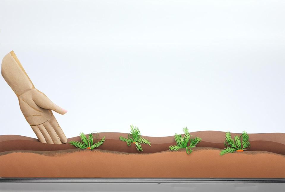 An illustration of a hand reaching into dirt with plants