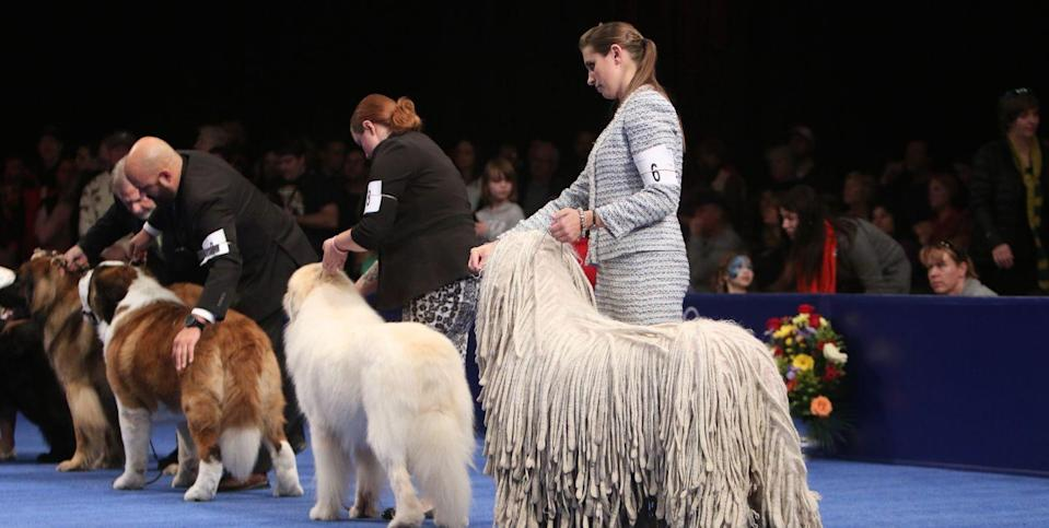 Is the National Dog Show Happening This Year? Here's Everything We Know.