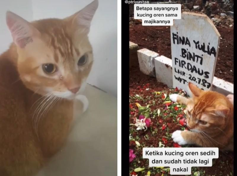 Tatan has caught the attention of TikTok users after mourning its former owner's death. — Screengrab via TikTok/ptriyunitaa