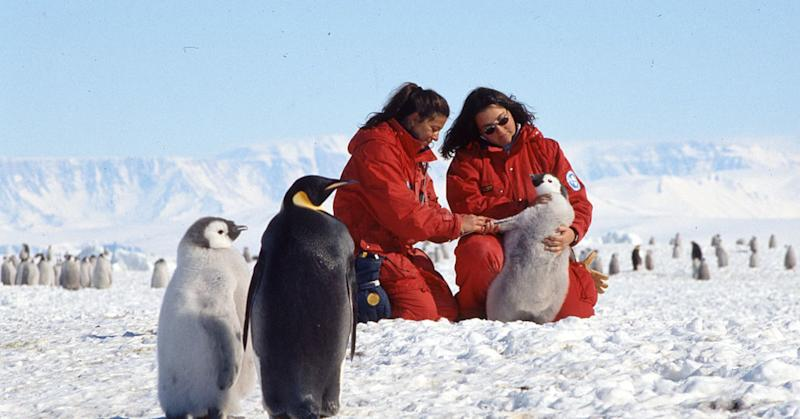 Wildlife biologists conducting research on the Adelia and Emperor penguins at Terra Nova Bay, in the Ross Sea, Antarctica.