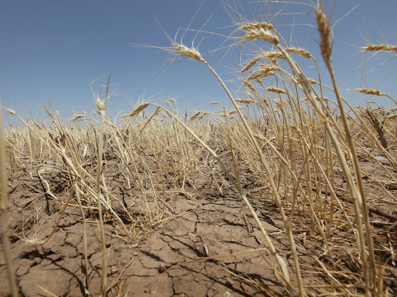 Climate Change Will Lead to More Expensive Food, USDA Finds