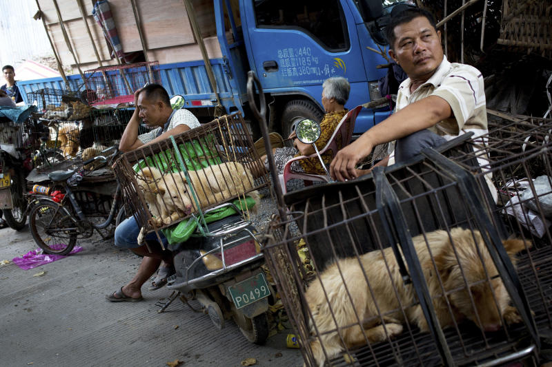 China reclassifies dogs as pets, not livestock