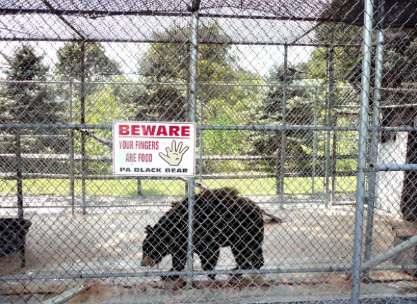 Bear rescued from ice cream shop cage after 20 years