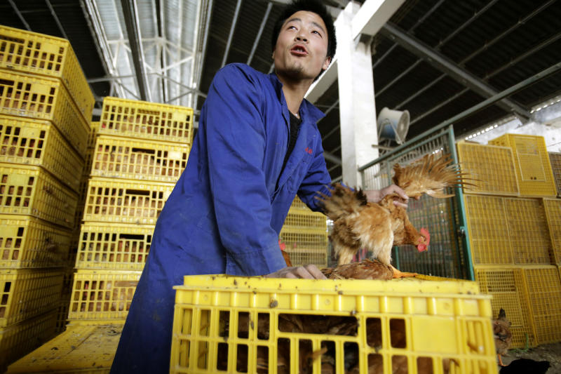 A worker unloads a chicken from a container at a wholesale market on Wednesday, April 3, 2013, in Shanghai, China. Scientists taking a first look at the genetics of the bird flu strain that recently killed two men in China said Wednesday the virus could be harder to track than its better-known cousin H5N1 because it might be able to spread silently among poultry without notice. The virus also appears to have mutated into a form that enables it to more easily infect animals such as pigs, meaning they could serve as hosts that spread the virus more widely among humans. (AP Photo/Eugene Hoshiko)
